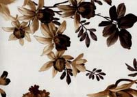 Lilium_Beige-Brown